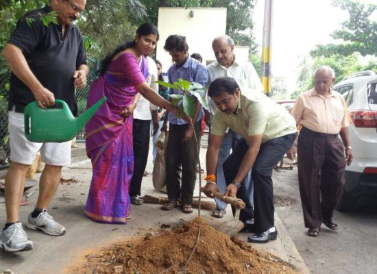 Roadside Tree Planting by Umesh Kabbal